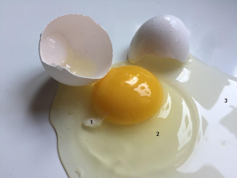 Un uovo fresco. I numeri indicano i tre tipi di colorazione dell'albume.